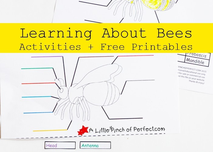 Learning About Bees Activities + Free Printable
