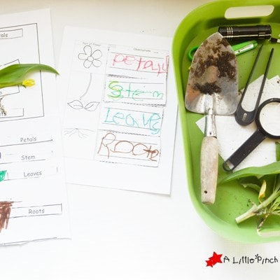 Learning About Plants: Activities and Free Printables for Kids