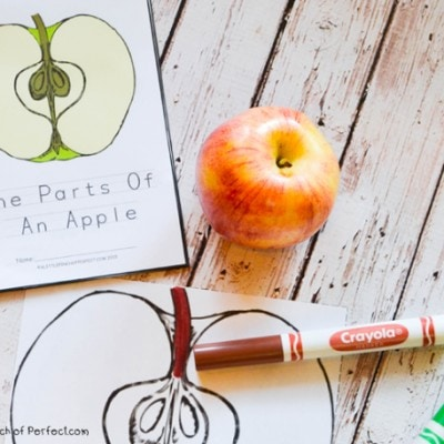 The Parts Of An Apple Color, Read, and Learn Free Printable Book