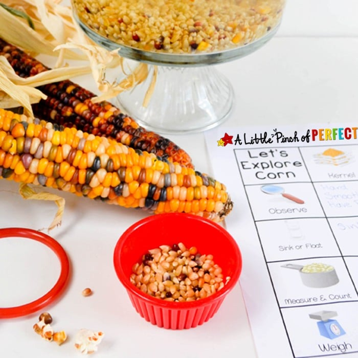 It's science time! Grab a bag of popcorn and get ready to learn with this simple and inexpensive kid's activity + Free Printable (measuring, pouring, counting, graphing, and weighing, fall kids activity).