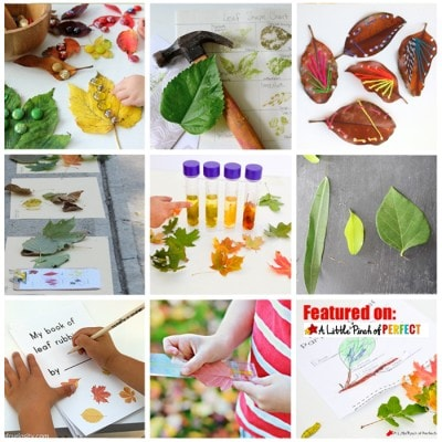 10 Fascinating Fall Leaf Activities for Kids