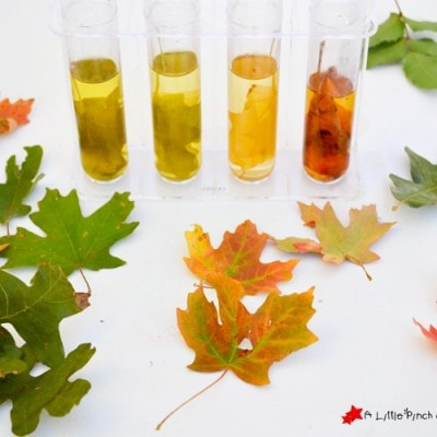 Easy Fall Leaf Science Experiment: Exploring Colors & Chlorophyll with Kids