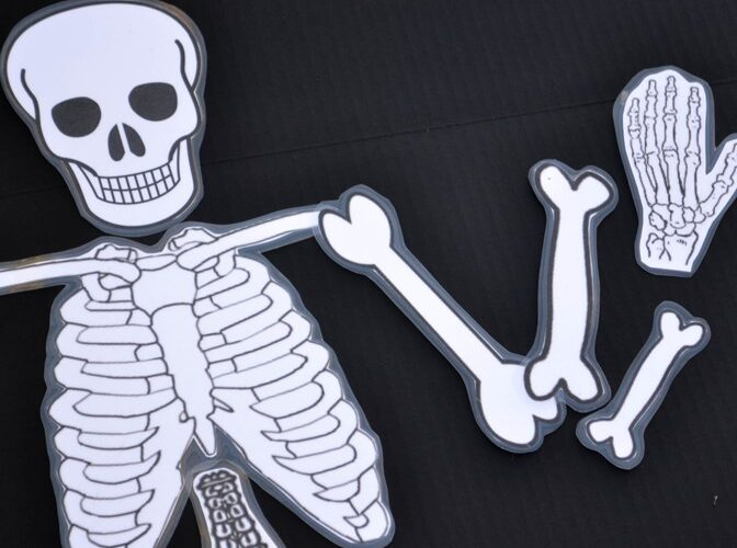 Have fun with your children learning about bones using our free printable skeleton, building with playdough, making a craft, and singing.