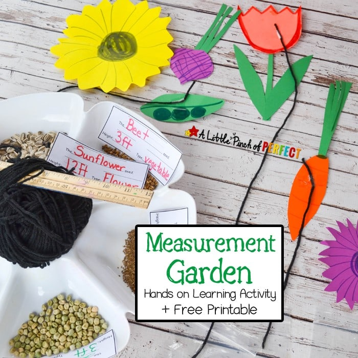 Measurement Garden-A Hands on Learning Activity and Free Printable: Kids can practicing measuring inches and feet while also counting, comparing, reading, and writing. Including free printable. (Spring, math)