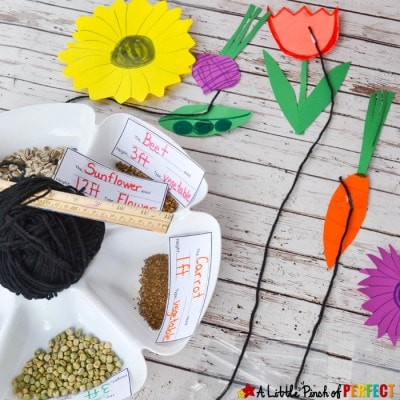 Measurement Garden Hands on Math Activity and Free Printable