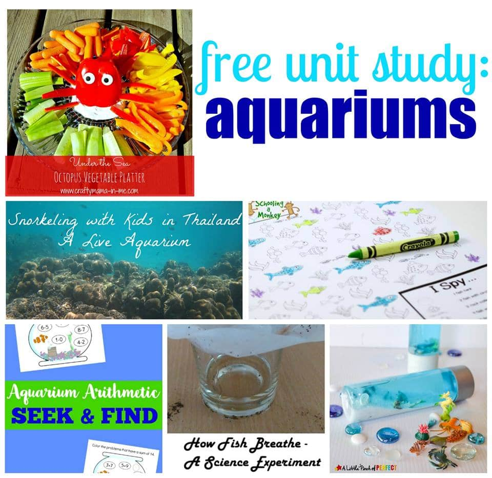 Ocean Aquarium Unit Study Activities