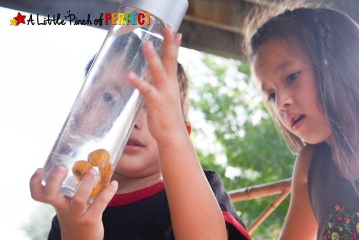 5 Little Pumpkins Float and Sink Halloween Sensory Bottle (preschool, kindergarten, October, fall, song/book)