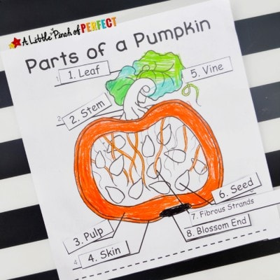 Learning about Pumpkins: Explore, Color, and Label Free Printable