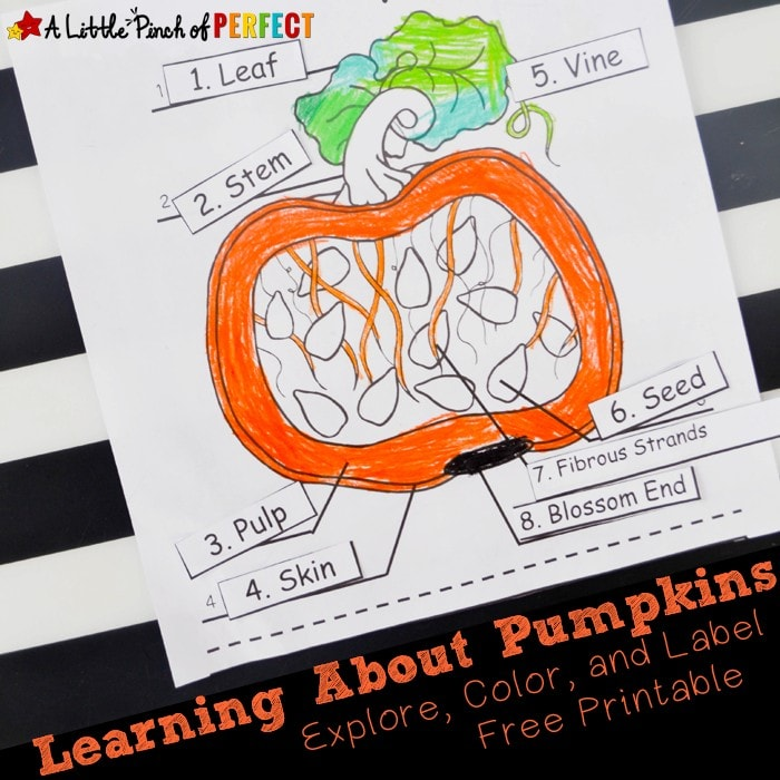 Learning about Pumpkins: Explore, Color, and Label the Parts of a Pumpkin Free Printable (science, kindergarten, first grade, Halloween, fall)