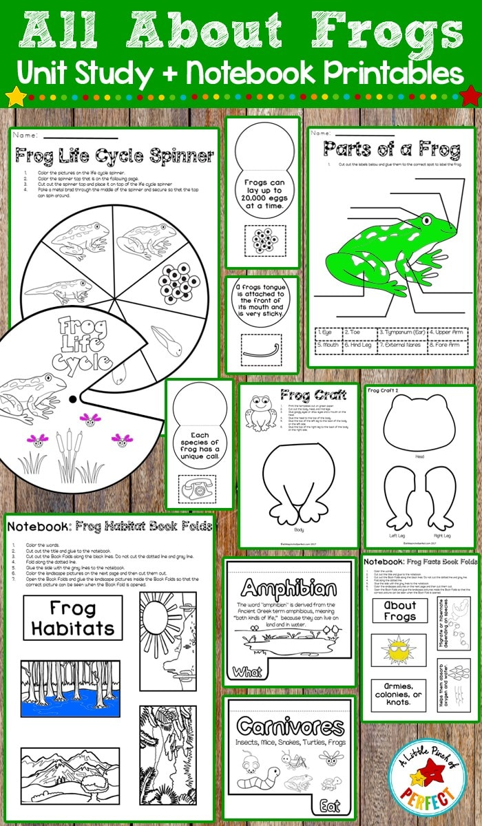 Learn about plants, the plant life cycle, and photosynthesis, make a plant craft, and more. This pack has tons of ideas for you to incorporate into your plant lesson and can be compiled into an interactive notebook or done individually.