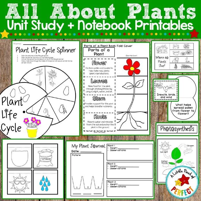 All About Plants Activities (Preschool, Kindergarten, First Grade, Second Grade)