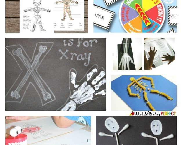 Learning about bones: Skeleton activities, crafts, and printables for kids