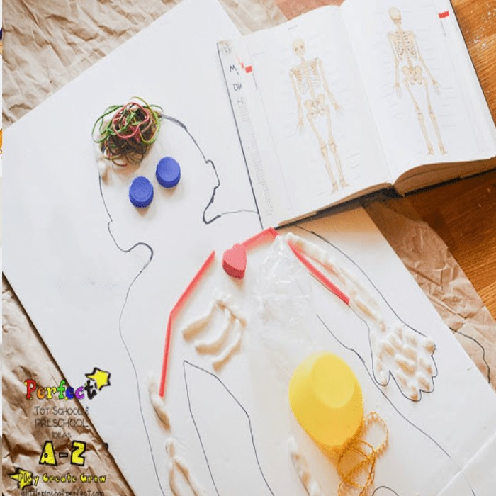 What's Inside My Body: Human Anatomy Activity for Kids