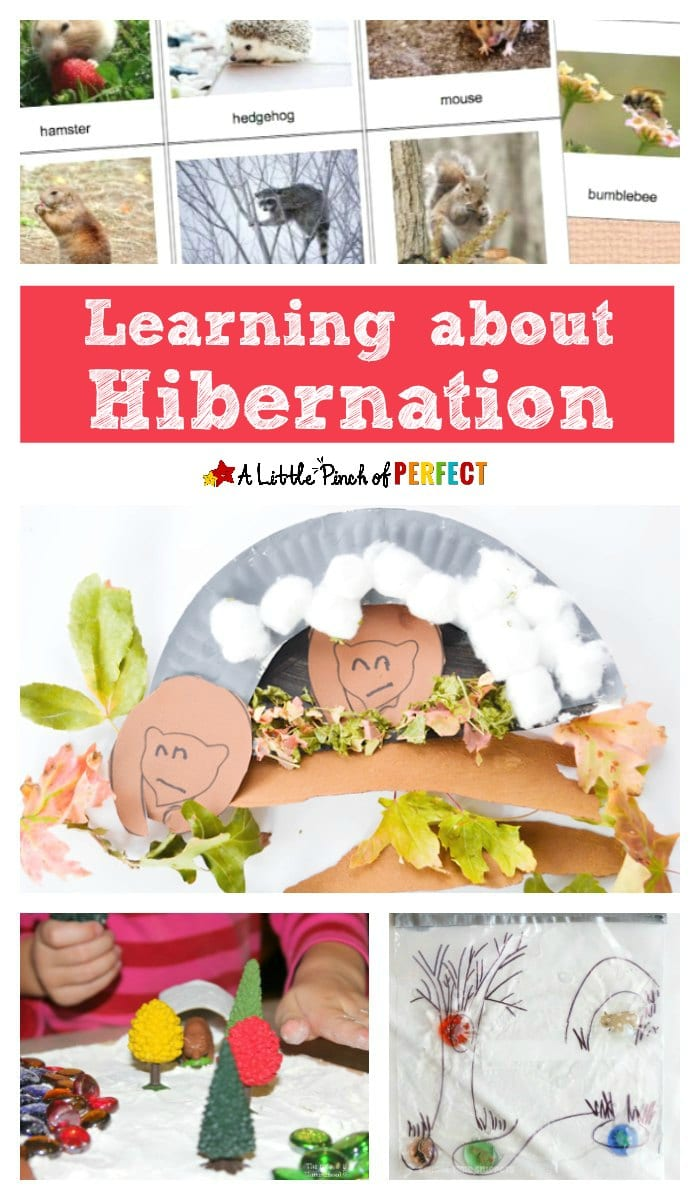 Learning about hibernation and how animals survive the coldest of Winters is such a mystery and fascinating topics for kids!