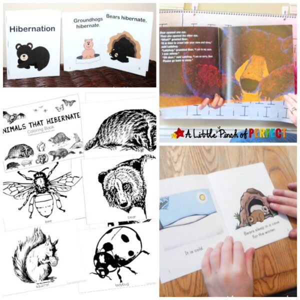 Inviting Ways to Learn about Hibernation for Kids