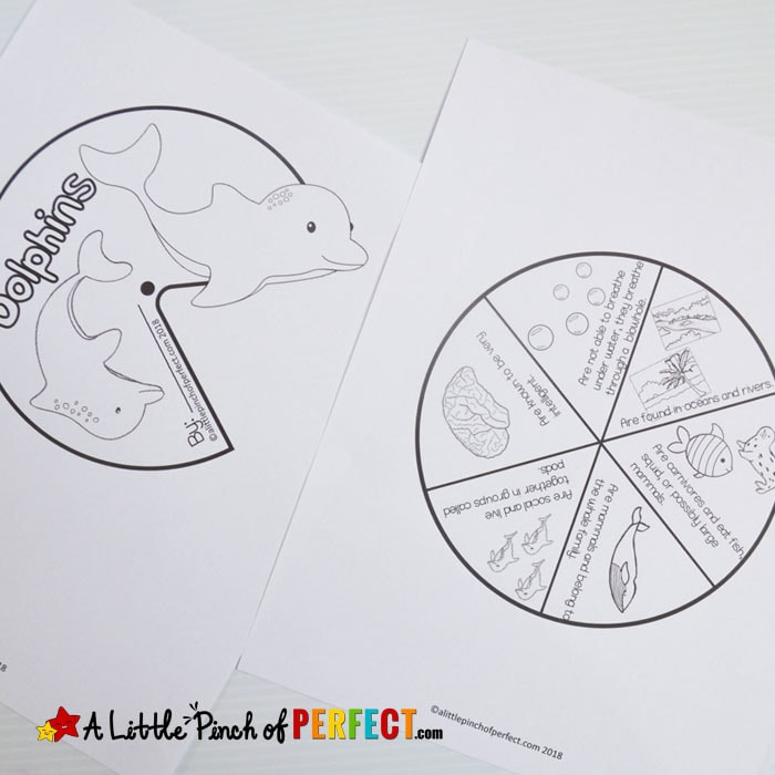 Learning About Dolphins: Activities for Kids and Free Printable Dolphin Facts Craft Spinner and More. (#kindergarten #firstgrade #secondgrade #homeschool #science #oceanunit)