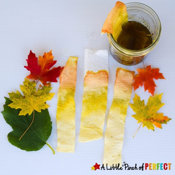 """With this easy science experiment children can see the different pigments found in leaves to help answer the question, """"Why do leaves change color?"""" This activity includes a free printable leaf color chart. (#kidsactivity #science #scienceexperiment #Fall #homeschool)"""