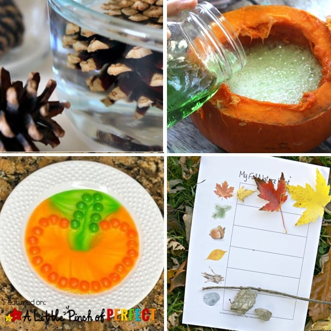 Fall Science experiments with pumpkins leaves pincones
