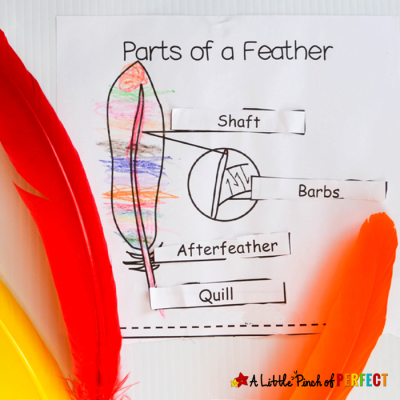 Learning About Bird Feathers: Explore, Color, and Label Free Printable