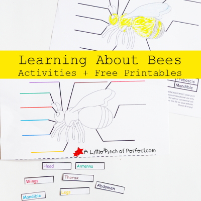 Learning About Bees Activities and Free Printable