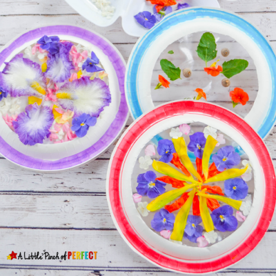 Beautiful Suncatcher Mandalas Nature Craft and Symmetry Activity