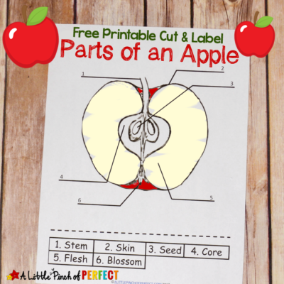 Learning About Apples: Color and Label Free Printable